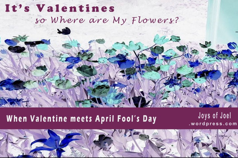 valentines day, joys of joel poems, poem about flowers, valentines, poetry, quote about valentines